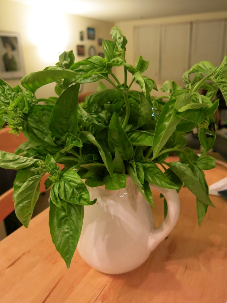 Basil for making pesto (photo by Naomi Krueger)