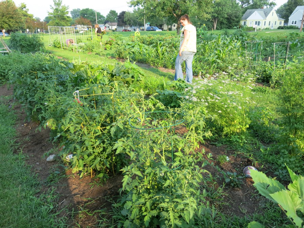 The community garden where I am gardening this summer. There are a few immigrant families who garden here, too.